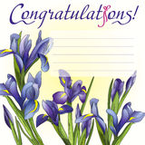 Congratulation card blue irises Stock Image