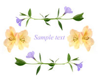Congratulation card - flowers background Stock Image