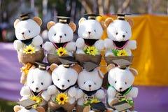 Congratulation Charming teddy bear whit graduation cap Royalty Free Stock Photo