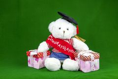 Congratulation Teddy Bear Royalty Free Stock Image