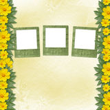 Congratulation to the holiday with slides. And yellow flowers Stock Photography