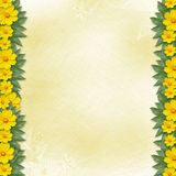 Congratulation to the holiday with yellow flowers Stock Photos