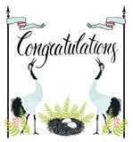 Congratulations card with Common Cranes, fern and  Royalty Free Stock Photography