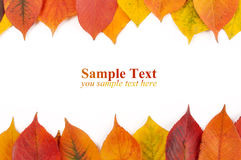 Congratulations form in the autumn leaves Royalty Free Stock Photo