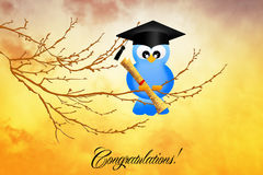 Congratulations for graduation Stock Images
