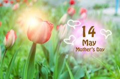 Congratulations on Mother`s Day at the background of the spring landscape.  Stock Images