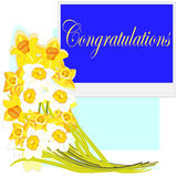 Congratulations. Narcissuses Stock Photo