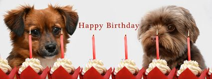 Little puppy dogs and birthday candles. Congratulations, two little puppy dogs with big eyes celebrating birthday with cup cakes and candles stock images