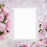 Congratulatory background with a card with space for text or photos and border pink roses Stock Images