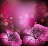 congratulatory background with flowers Stock Images