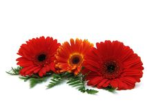 Congratulatory card. Whith red and orange gerberas on a white background Stock Photos