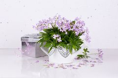 Congratulatory concept. With spring flowers and place for text Royalty Free Stock Images