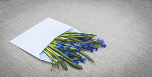 Congratulatory letter. White envelope and blue wildflowers. Easter spring card. Congratulatory envelope with a bouquet of wild flowers - blue forest wooded area Royalty Free Stock Images