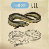 Congro espinhoso ou esboço bonde, da serpente ou da enguia da lama Imagens de Stock Royalty Free