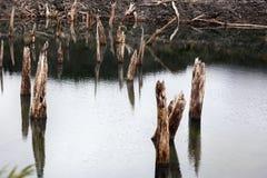 从Conguillio国家公园的Arcoiris盐水湖 免版税图库摄影