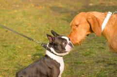 Conhecimento de dois cães imagens de stock