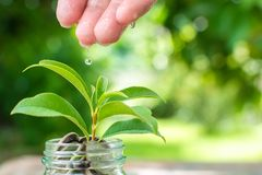 Coni in barattolo con la pianta che cresce, conservi i soldi e il concep di investimento Fotografia Stock Libera da Diritti