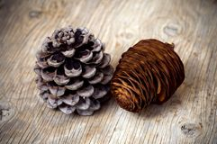 Coni del cedro e del pino Fotografia Stock
