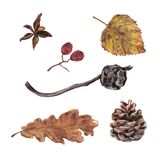 Coni del cipresso e del pino, foglie di autunno e bacche royalty illustrazione gratis