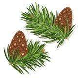 Coni del pino illustrazione di stock