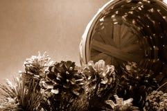 Coni del pino con il cestino (seppia) Fotografie Stock Libere da Diritti