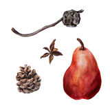 Coni del pino e del cipresso dell'acquerello con la pera rossa matura royalty illustrazione gratis