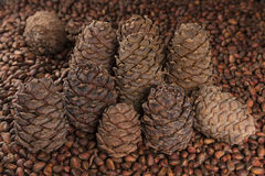 Coni del pino e noci di pino Fotografie Stock
