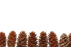Coni del pino isolati su priorità bassa bianca Fotografia Stock