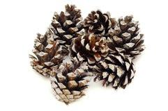 Coni del pino su una priorità bassa bianca Immagini Stock Libere da Diritti