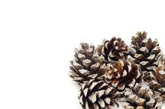 Coni del pino su una priorità bassa bianca Immagine Stock