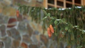 Coni dell'albero di abete su un ramo Abete rosso sempreverde durante le precipitazioni nevose di inverno E stock footage