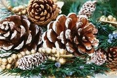 Coni dell'albero di pino Fotografia Stock