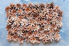Coni di abete sui precedenti di legno Immagine Stock Libera da Diritti