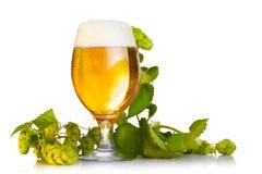 Coni di luppolo con birra Immagini Stock