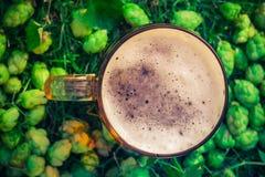 Coni di luppolo del fondo della birra della pinta di vista superiore Fotografia Stock