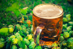 Coni di luppolo del fondo della birra fredda della pinta Immagini Stock Libere da Diritti