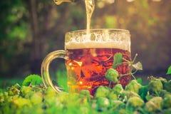 Coni di luppolo di mezzo della birra fredda Fotografie Stock Libere da Diritti