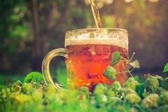 Coni di luppolo di mezzo della birra fredda Immagini Stock Libere da Diritti