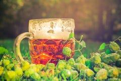Coni di luppolo di mezzo della birra fredda Immagine Stock