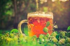 Coni di luppolo di mezzo della birra fredda Fotografia Stock Libera da Diritti