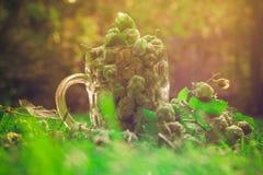Coni di luppolo verdi pieni della tazza di vetro Immagini Stock