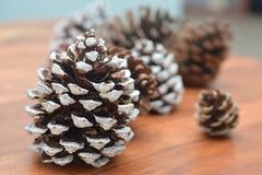 Coni di Natale per la festività Fotografia Stock