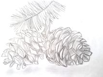 Coni disegnati a mano del cedro Immagine Stock