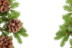 Coni ed aghi del pino Fotografie Stock