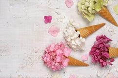 Coni gelati con i fiori dell'ortensia Immagine Stock Libera da Diritti