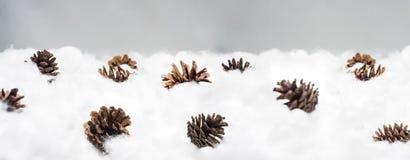 Coni nella neve Macro foto dei coni decorativi Immagini Stock Libere da Diritti