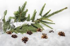 Coni nella neve Macro foto di piccoli coni decorativi Fotografia Stock