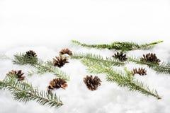 Coni nella neve Macro foto di piccoli coni decorativi Fotografia Stock Libera da Diritti