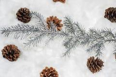 Coni nella neve Macro foto di piccoli coni decorativi Fotografie Stock Libere da Diritti