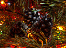 Coni su un albero festivo Fotografie Stock